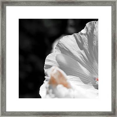 White Flower Detail Framed Print by Vlad Baciu