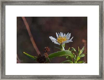 Framed Print featuring the photograph White Flower Dew-drops Autumn by Jivko Nakev
