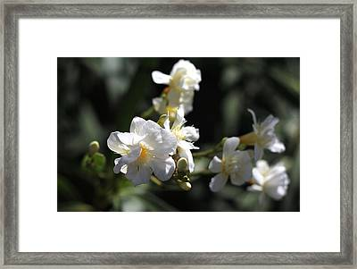 Framed Print featuring the photograph White Flower - Early Spring Time by Ramabhadran Thirupattur