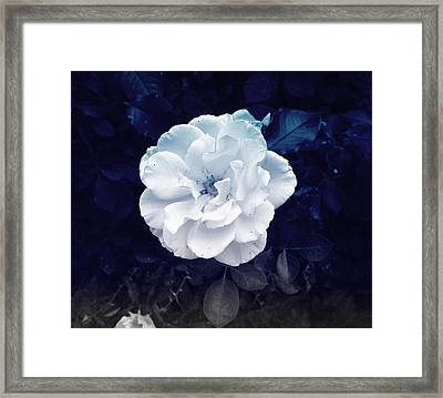White Flower Framed Print
