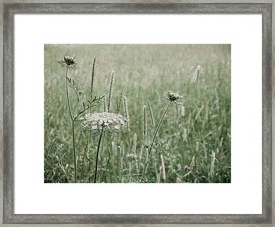 White Flower In A Meadow Framed Print by Rob Huntley