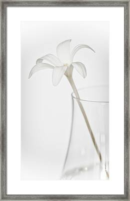 Framed Print featuring the photograph White Flower In A Vase by Zoe Ferrie