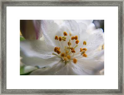 Framed Print featuring the photograph White Flower by Jay Stockhaus