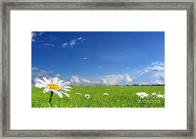 White Flower Landscape Framed Print by Boon Mee