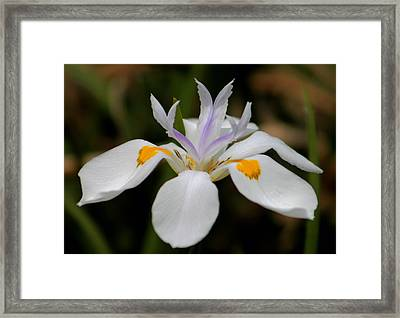 White Flower Framed Print by Pamela Walton