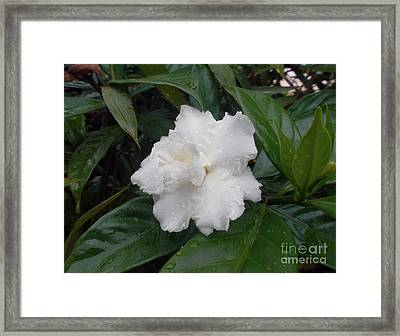 White Flower Framed Print by Sergey Lukashin