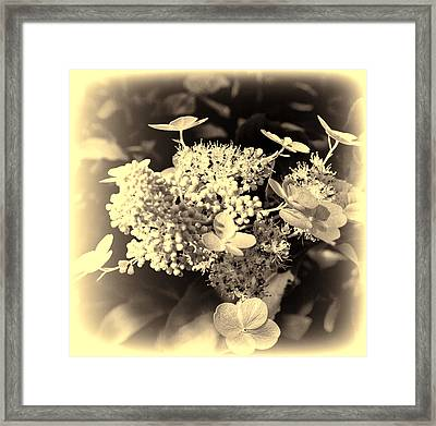 white flower SV Framed Print