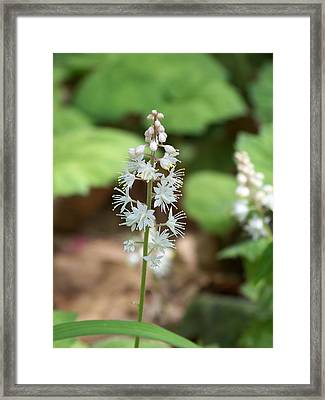 White Flowers Framed Print by Brittany Gandee