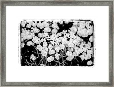 Framed Print featuring the photograph White Flowers  by Craig Perry-Ollila