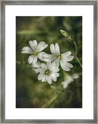White Flowers Framed Print by Gynt