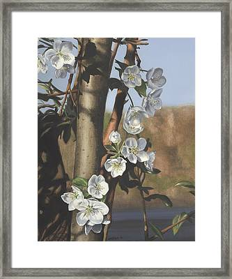 White Flowers Framed Print by Michele Renee