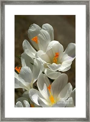 White Flowers Framed Print by Nur Roy