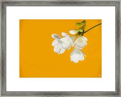 White Flowers On Tangerine Study Framed Print