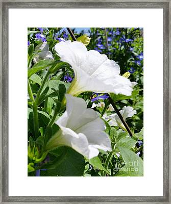Framed Print featuring the photograph White Flowers by Rose Wang