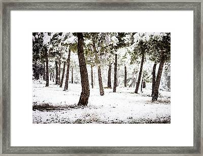 White Forest Framed Print
