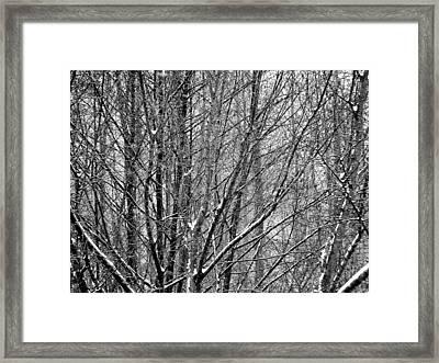 White Forest Framed Print