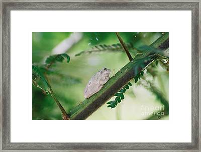 Framed Print featuring the photograph White Frog by Donna Brown