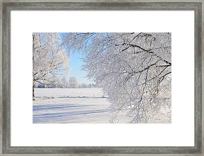 White Frost Framed Print by Conny Sjostrom