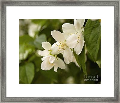 White Garden I Framed Print