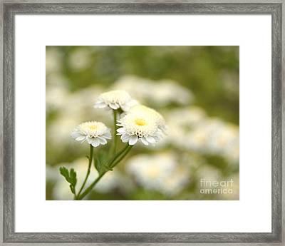 White Garden II Framed Print
