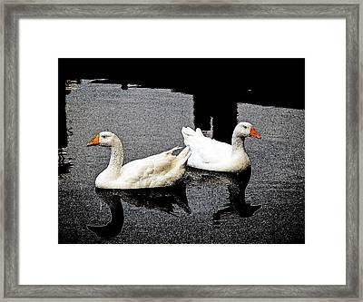 White Geese Framed Print