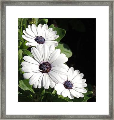 White Gems Framed Print