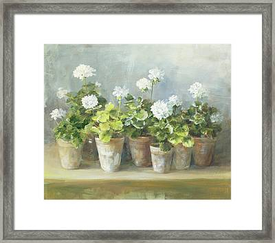 White Geraniums Framed Print by Danhui Nai