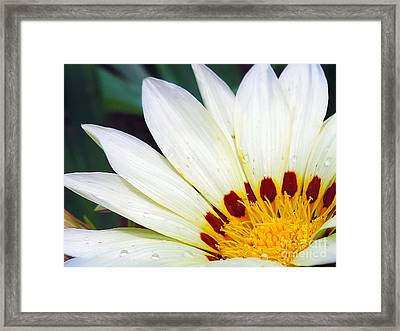 Framed Print featuring the photograph White Gerber by Elvira Ladocki