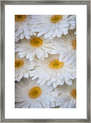 White Gerbera. Amsterdam Flower Market Framed Print by Jenny Rainbow