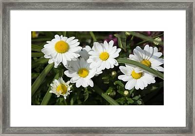 White Gerbera Daisy Framed Print by Priyanka Ravi
