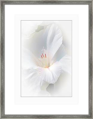 White Glad Framed Print