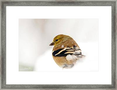 White Gold Goldfinch Framed Print by Christina Rollo