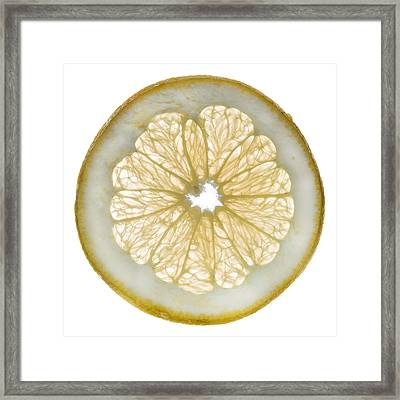 White Grapefruit Slice Framed Print by Steve Gadomski