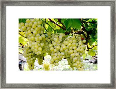 White Grapes Framed Print