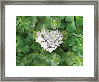 White Green Flower Framed Print by Alixandra Mullins