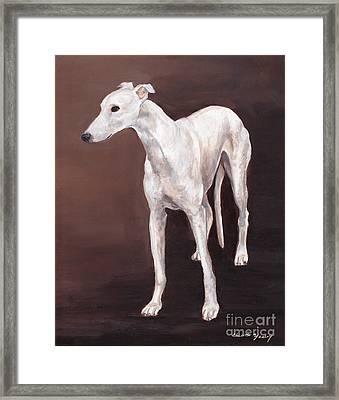 White Greyhound Framed Print by Charlotte Yealey