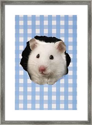 White Hamster Framed Print by Greg Cuddiford