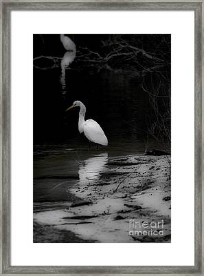 Framed Print featuring the photograph White Heron by Angela DeFrias