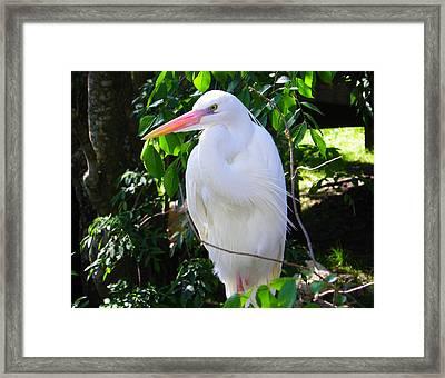 White Heron Beauty Framed Print by Judy Wanamaker