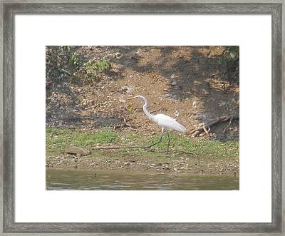Framed Print featuring the photograph White Heron by Eric Switzer