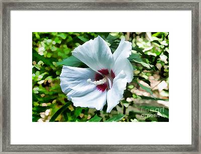White Hibiscus From Missouri Botanical Gardens Framed Print by Luther   Fine Art