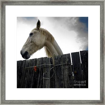 White Horse Framed Print by Bernard Jaubert