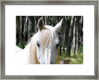 Framed Print featuring the photograph White Horse Close Up by Jocelyn Friis