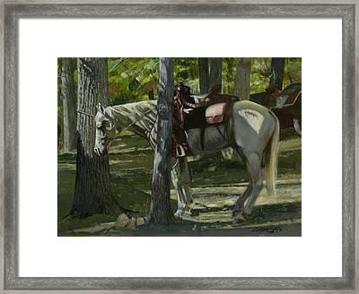 White Horse Tied Framed Print by Don  Langeneckert