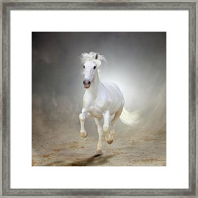 White Horse Galloping Framed Print by Christiana Stawski