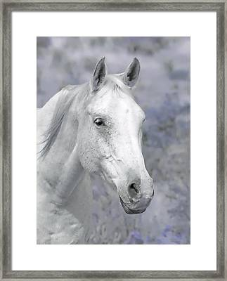 White Horse In Lavender Pasture Framed Print by Jennie Marie Schell