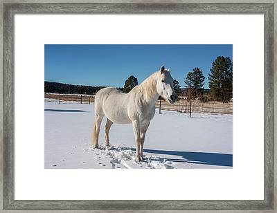 White Horse In Snow Framed Print