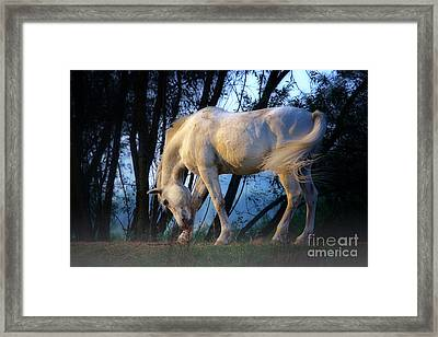 Framed Print featuring the photograph White Horse In The Early Evening Mist by Nick  Biemans