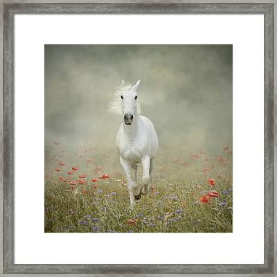 White Horse Running Through Poppies Framed Print by Christiana Stawski