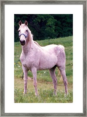 White Horse Framed Print by Susan Crossman Buscho